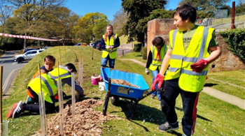 Young volunteers plant trees in parks